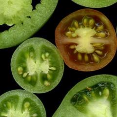 59408.15 Solanum lycopersicum (horticultural art) Tags: horticulturalart solanumlycopersicum solanum tomato fruit sliced