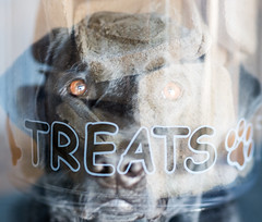1/52 and 4/365 2019 (d2roberts) Tags: 365the2019edition 3652019 day4365 04jan19 doubleexposure treats dunkel ddc dailydogchallenge 52weeksfordogs 152