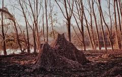 Creatures from the River Po (AIeksandra) Tags: forest nature perspective 35mm film analog praktical cremona fiumepo lombardia pianurapadana