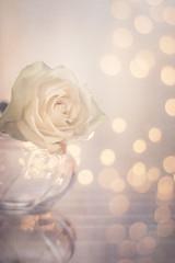 White rose (Ro Cafe) Tags: lensbaby lensbabyedge80 light onerose sonya7iii stilllife bokeh macroconverter whiterose textured