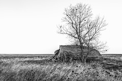 Scenic, South Dakota (paccode) Tags: grass d850 landscape greatplains brush serious quiet home shack shed abandoned barn monochrome wreck tree house solemn farm scary forgotten southdakota blackwhite creepy scenic unitedstates us