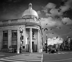 DSC_6121-Pano-2PSedit8980PSedit8982.jpg (Jorge Carrera) Tags: washington dc m street wisconsin ave birds sky