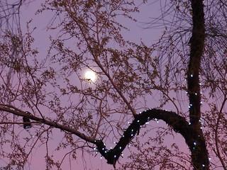 Moon Behind Decorated Tree