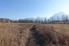 Réserve naturelle du Bout-du-Lac @ Doussard @ Walk in Sources du Lac d'Annecy (*_*) Tags: february afternoon 2019 hiver winter annecy 74 hautesavoie france europe sourcesdulacdannecy savoie walk randonnée nature hiking mountain marche doussard forest naturereserve parc