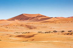 Sandscape (Kevin Rheese) Tags: africa dunes sand landscape desert namibia namibnaukluftpark hills arid namibsandsea dry