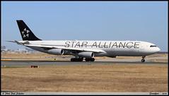 "AIRBUS A340 313 ""STAR ALLIANCE"" D-AIFE 0434 Frankfurt septembre 2018 (paulschaller67) Tags: airbus a340 313 staralliance daife 0434 frankfurt septembre 2018"