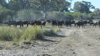 Namibia Dangerous Game Safari - Caprivi Strip 120