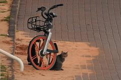 Коты (unicorn7unicorn) Tags: кошка кот набережная велосипед wah 365the2019edition 3652019 day64365 05mar19