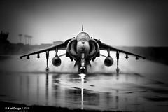 ZG511/82 - British Aerospace Harrier GR9 - No. 1(F) Squadron, RAF (KarlADrage) Tags: zg511 britishaerospaceharriergr9 gr9 harriergr9 1fsqn 1sqn raf royalairforce egxj rafcottesmore jfh jointforceharrier jumpjetblackandwhite