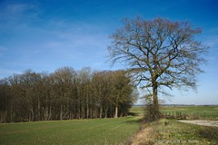 Top Tree (Spotmatix) Tags: 2870mm a7 belgium biesme camera countryside landscape lens namur nature places sony trees zoomstd