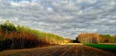 Pole (ewacykada) Tags: przedwiośnie pole podlasem drzewa