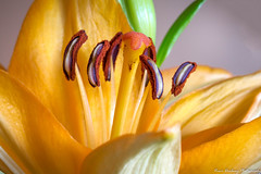 """Bugs-eye view""-5186-3.jpg2 (vdrobphoto) Tags: flowers flower macro canon5d111 canon100mm28l"