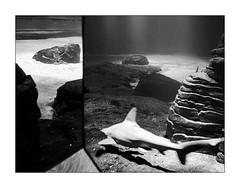 Comme un air de bijoux. (Scubaba) Tags: europe france pasdecalais noirblanc noiretblanc bw blackwhite monochrome nausicaa requin shark
