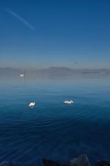 Lago di Garda (Slow is Better) Tags: ifttt 500px gardalake blue garda water sky italy lake italia travel beautiful