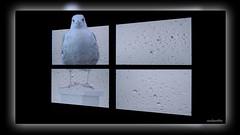 5 Windowsduve (andantheandanthe) Tags: creative creativity closeup close up macro trix photoshop adobe kreativ kreativitet närbild makro kreativer herauf makrotix créativité créative gros plan fine creativa del primo piano di creatività sulla creatividad primer plano snow snö gull seagull rain window windows