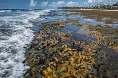 20190103 Praia do Forte 007.jpg (blogmulo) Tags: brasil bahia beach landscape praiadoforte brazil lowtide salvador family coral travel