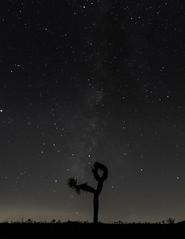 Lonely under the stars. (rob_luna) Tags: sony a7r3 a7riii sigma contemporary silhouette joshua tree california desert dogwood2019 dogwood52 milky way stars night