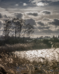 cold and windy (hjuengst) Tags: winter winterbeauty january januar windy windig clouds cloudy wolken wolkig bewölkt overcast tree baum see lake gegenlicht backlight