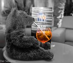 EIn Bär und ein Drink --- A bear and a drink (der Sekretär) Tags: alkohol bar bär geschirr getränk glas plüschtier spielzeug strohhalm teddy teddybär tier tisch alcohol animal bear beverage dish dishes drink glass softtoy straw stuffedtoy table teddybear toy