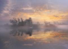 Blanket foggy (Maurizio Fecchio) Tags: sunrise morning longexposure foggy fog landscape lake reflections clouds sky swan water atmosphere tranquility lights haidafilters