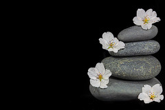 Cairn With Cherry Blossoms (KellarW) Tags: balanced onblack four balance riverstone cairn balancedisolation isolatednature riverstones cherryblossoms blossom five stacked
