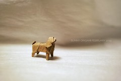 American cocker spaniel designed by Satoshi Kamiya (Sunny^o^) Tags: origamidog origami satoshikamiya sunny'sorigami americancockerspaniel