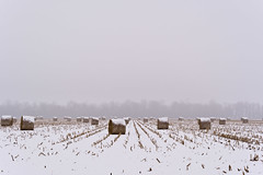 Round Bales in Winter (ramseybuckeye) Tags: round bales agriculture corn field stubble farm winter snow cold rows perspective pentax art life van wert county ohio