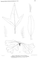 beitrgezurpal04wien_0245 (kreidefossilien2) Tags: velenovský bohemiancretaceousbasin bohemian czech republic palaeobotany flora kieslingswalde