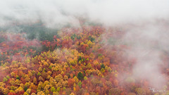 Misty autumn colours