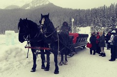 Pony Sleigh Ride (Mr. Happy Face - Peace :)) Tags: fairmount chateau hotel 25years lakelouise winter horses activities art2019 cans2s canada alberta albertabound strangers wtbw