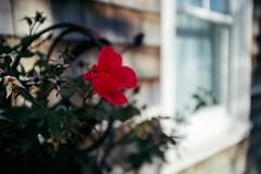 Untitled (Dominic Bugatto) Tags: atlanticbeach jaxbeaches jacksonville florida floridatopography streetphotography fujifilmx100f 2018