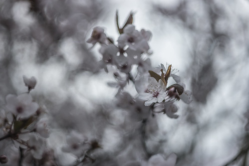 When Spring And Winter Collide