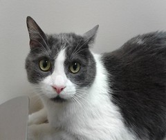 Mitch - 4 year old neutered male