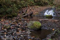 Above Ellowa Falls, October 2015.tif (Gary L. Quay) Tags: columbiagorge oregon water cascade fall autumn nikon garyquay