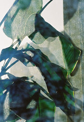 no title (biancarosa.looman) Tags: analog handheld lightshadow plant reflection canon kodakfilm