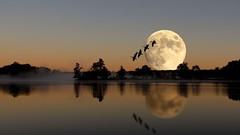 Moon over Lake (Fake Photo).... (Steve InMichigan) Tags: photoshopped fakeimage fakephoto editedphoto lake moon moonoverlake lakerefection earlymorning