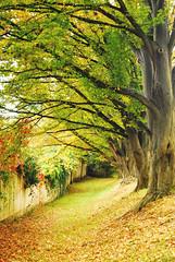 Tunnel (Anselmo Portes) Tags: tree trees ceskykrumlov repúblicatcheca czechrepublic europe europa green verde leaves leaf folhas folha