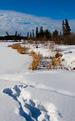 Tracks in the snow! (J.R. Rondeau) Tags: rondeau yellowknife nt inghamtrail snow trees canon1740f4 canoneos photoshopelements10