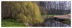 stitch of 2 shots, Sony A7RII with Zeiss OTUS 85mm/1.4 @ f/9 (Dierk Topp) Tags: a7rii a7rm2 bäume ilce7rii ilce7rm2 sonya7rii zeissotus1485mm panorama sony tree trees wood