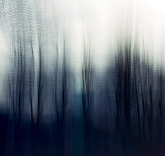 Trees (Zara.B) Tags: nature trees intentionalcameramovement icm impressions iphone slowshutterapp abstract blur