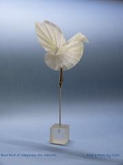 Happy New Year 2019 (esli24) Tags: bluebirdofhappiness michaeladcock origami
