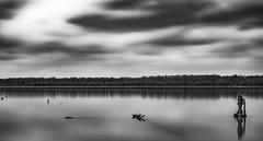 A gloomy day in January (gary_photog) Tags: nikonz7 1450milvus zeissmilvus monochrome longexposure leefilter lake clouds daarklands
