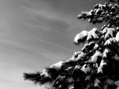 Wintertime (superhic) Tags: winter snow sky pine zima sneg bor blackwhite nebo tistheseason