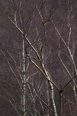 Träume aus der Glut (BMiMagic) Tags: bruno müller switzerland misox tessin träume glut lostallo cabbiolo