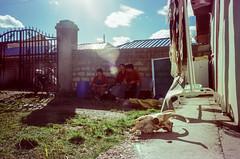 Sheep Skull (hiphopmilk) Tags: copyright©jaredyehwooehmoehfilms konica offroad 現場監督 zoom 35mm 135film film analog analogue jaredyeh hiphopmilk kodak travel china sichuan aba hongyuan tibetan qiongxi village yard skull sunlight rest smoko break workshop noon lensflare