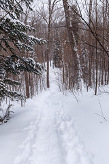IMG_5088 (Cam Salsbury) Tags: bluespruce thegauntlet snowshoe trail