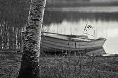 By the lake (Stefano Rugolo) Tags: stefanorugolo pentax k5 pentaxk5 smcpentaxm100mmf28 kmount ricohimaging monochrome blackandwhite bythelake lakeshore boat impression reeds tree lake water branches grass landscape nature birch reflection depthoffield manualfocuslens manualfocus manual vintagelens hälsingland sweden sverige forest calm serene peaceful