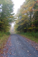 Foggy Fall Road (Northern Wolf Photography) Tags: 14mm autumn colors em5 fall fog forest grass leaves olympus road statepark trees woodford woods bennington vermont unitedstatesofamerica us