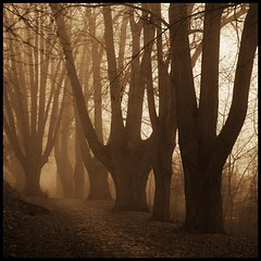 guardians (luci_smid) Tags: trees branches impression sepia monochrome