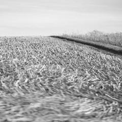 The Way up (memories-in-motion) Tags: black white blackandwhite square landscape bokeh fuji gf110mmf2rlmwr 110mm f2 gfx50r way path ed